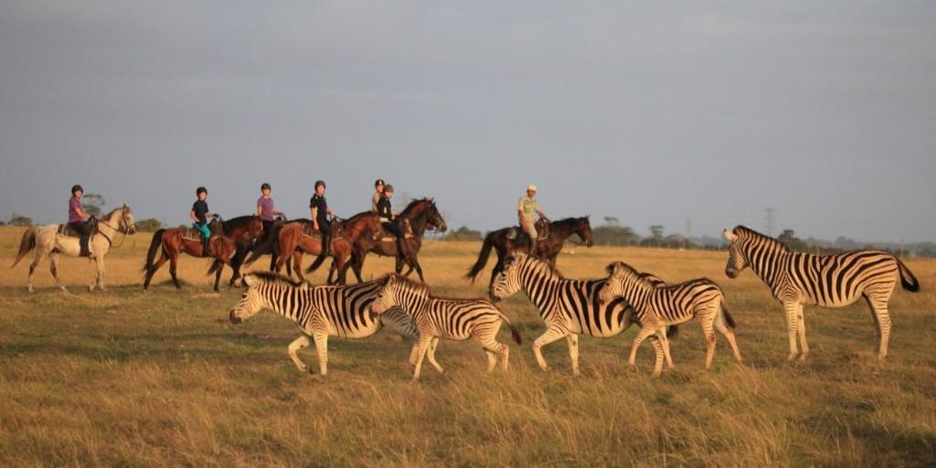 Optional activities at Botlierskop include horseback safaris for meeting plains game
