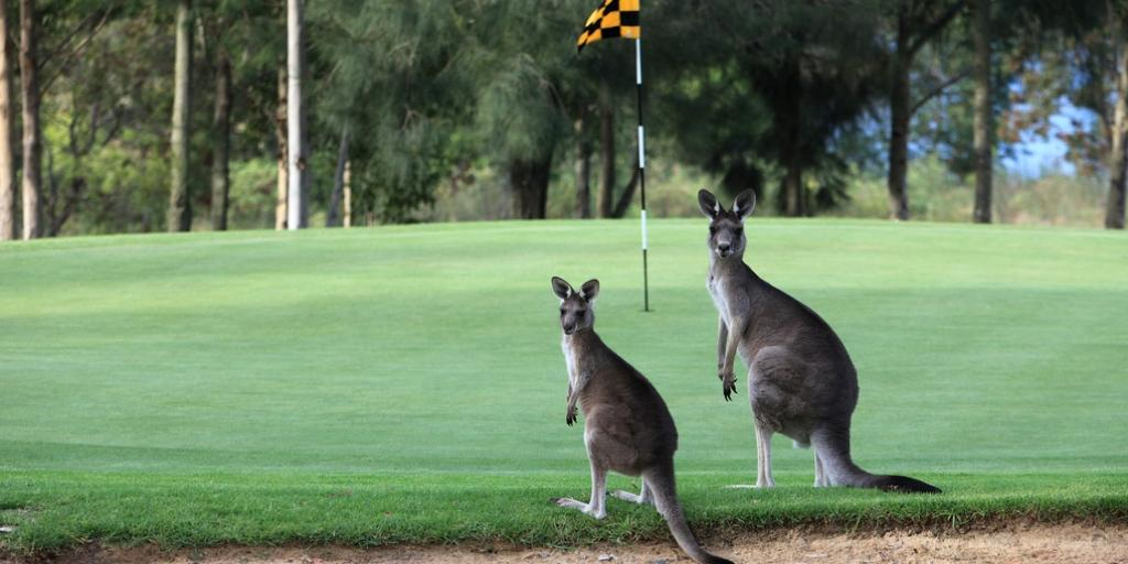 Tee off with kangaroos for company