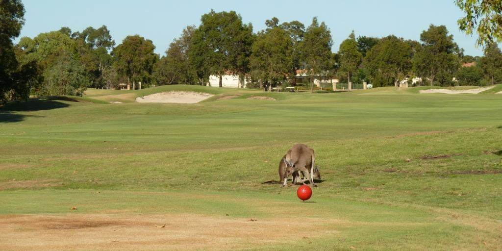The 11th tee at The Vines Resort Ellenbrook Course