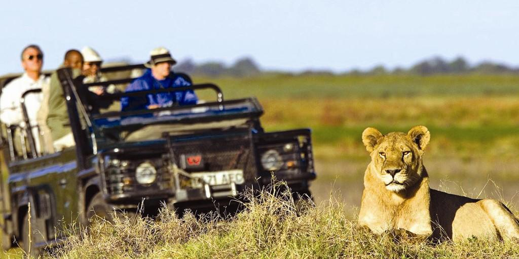 Say hello to the king of the bushveld: Lion on Game Drive safari
