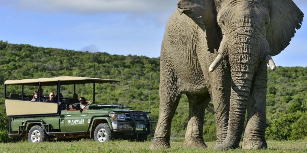 Lookout for the largest mammal on earth at Shamwari