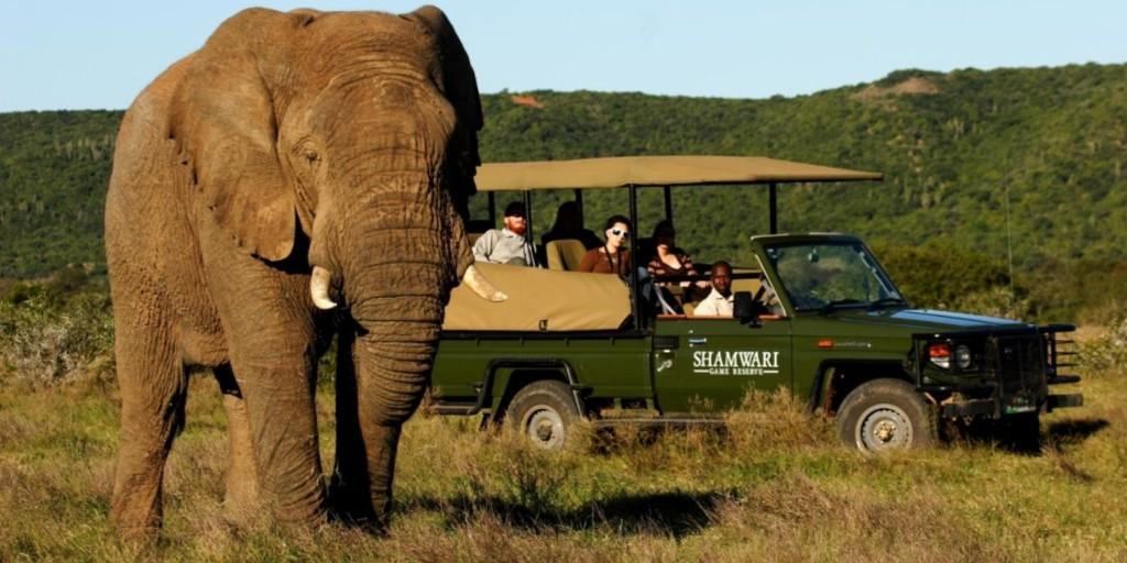 Shamwari Game Reserve: Elephant on Safari